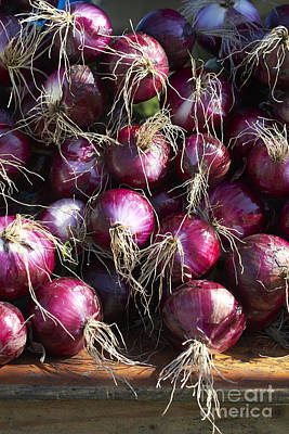 Farm Stand Photograph - Red Onions by Tony Cordoza