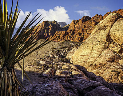 Oldzero Photograph - Red Rock Canyon by Steve Benefiel