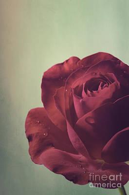 Red Rose Print by Jelena Jovanovic