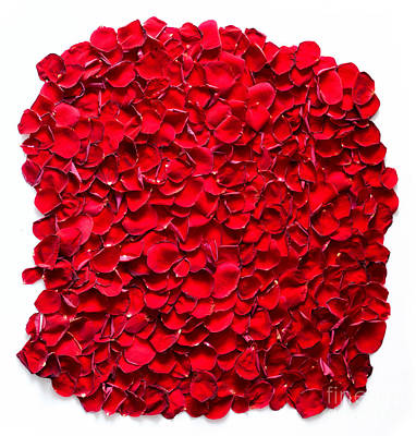 Valentine Photograph - Red Rose Petals Background by Michal Bednarek