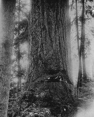 Resting In Redwood Print by Retro Images Archive