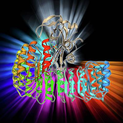 Molecular Structure Photograph - Ribonuclease Bound To Inhibitor by Laguna Design