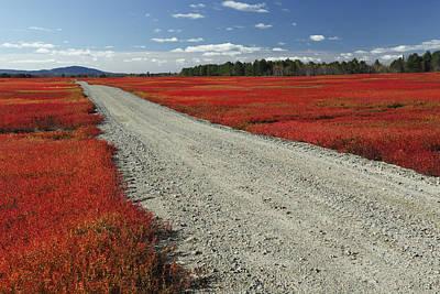 Road Through Autumn Blueberry Maine Print by Scott Leslie