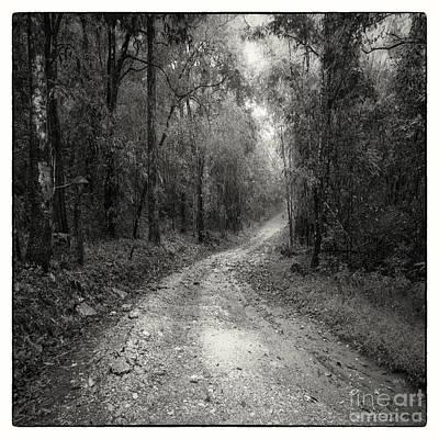 Black And White Rural Photograph - Road Way In Deep Forest by Setsiri Silapasuwanchai
