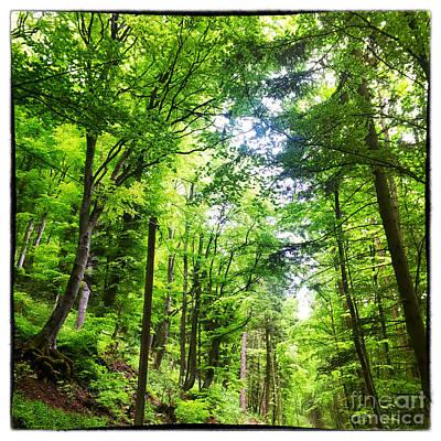 Green Photograph - Romantic Forest Landscape by Regina Koch