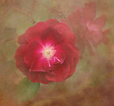 Red Leaves Photograph - Rose by Angie Vogel