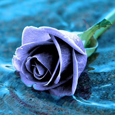Rose In Water  Original by Toppart Sweden