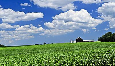 Corn Field Photograph - Rural Landscape by Elena Elisseeva