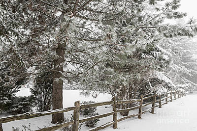 White Photograph - Rural Winter Scene With Fence by Elena Elisseeva