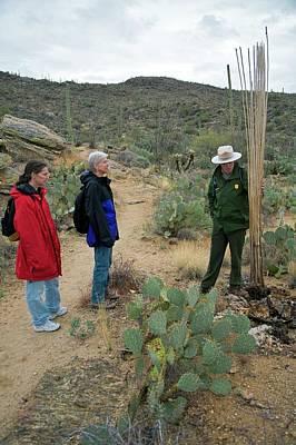 Josh Photograph - Saguaro National Park Tourism by Jim West