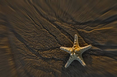 Sand Prints And Starfish II Print by Susan Candelario