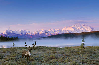 Northside Photograph - Scenic View Of Mt. Mckinley And Wonder by Michael DeYoung