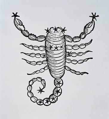 Signs Of The Zodiac Drawing - Scorpio by Italian School