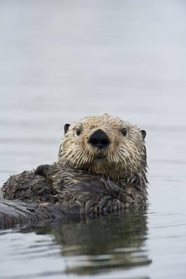 Otter Photograph - Sea Otter Alaska by Michael Quinton