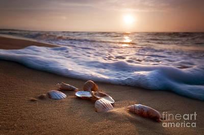 Shells Photograph - Sea Shells On Sand by Michal Bednarek