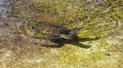 Small Turtle Photograph - Sea Turtle 2 by Cheryl Young