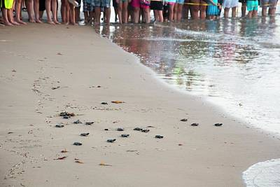 Introduction Photograph - Sea Turtles Conservation by Jim West