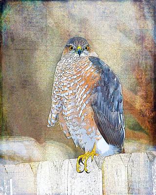 Hawk Digital Art - Sharpie by Betty LaRue
