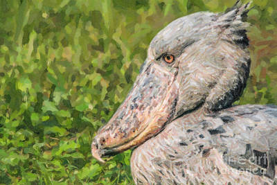 Stork Digital Art - Shoebill Balaeniceps Rex Uganda Africa by Liz Leyden