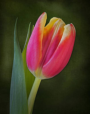 Exotic Photograph - Signs Of Spring by Susan Candelario