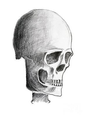 Human Head Drawing - Skull by Michal Boubin