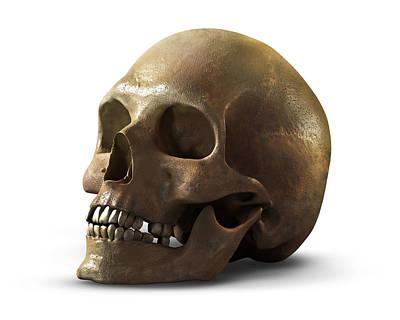 Skull Print by Vitaliy Gladkiy