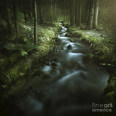 Small Stream In A Forest, Pirin Print by Evgeny Kuklev