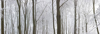 Bare Trees Photograph - Snow Covered Trees In A Forest, Wotton by Panoramic Images