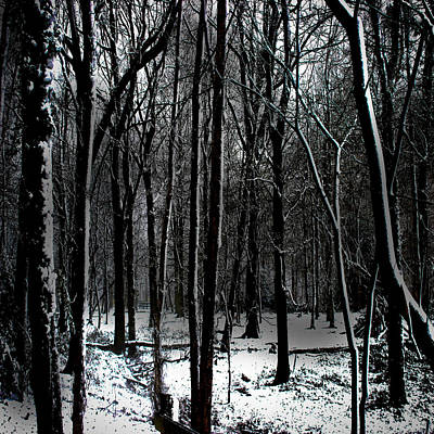 Winter Trees Photograph - Snow Covered Woodland by Martin Newman
