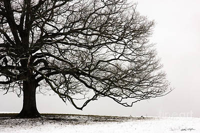 Snow Tree 2010 Print by Matthew Turlington