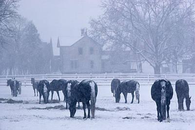 Snowfall Corral Print by Bruce Thompson