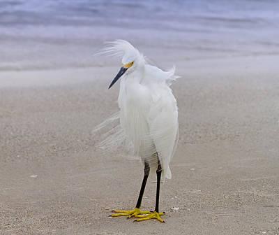 Snowy Egret At The Beach Print by Kim Hojnacki
