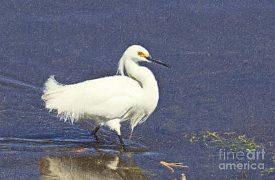 Bird Digital Art - Snowy Egret Egretta Thula by Liz Leyden