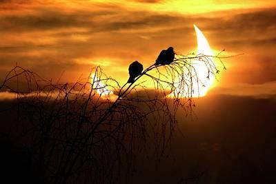 Solar Eclipse Photograph - Solar Eclipse by Detlev Van Ravenswaay