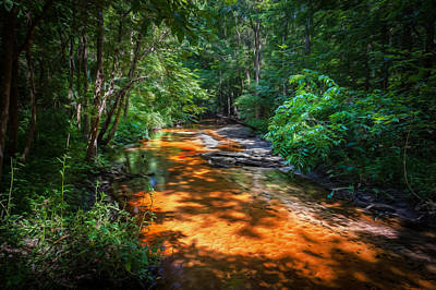 Cypress Swamp Photograph - Soldiers Creek Seminole County Florida  Painted by Rich Franco