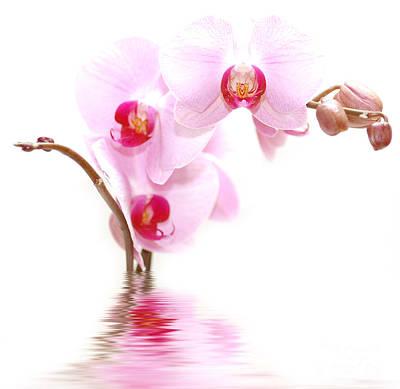 Liquid Photograph - Spa Flowers by Michal Bednarek