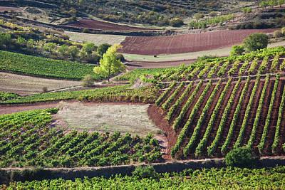 Fall Wine Grapes Photograph - Spain, La Rioja Region, La Rioja by Walter Bibikow