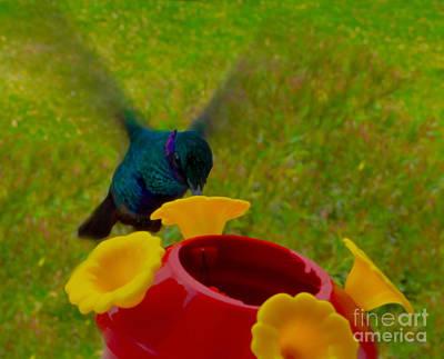 Sparkling Violetear Hummingbird Print by Al Bourassa