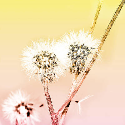 Copy Mixed Media - Spring Dandelion by Toppart Sweden