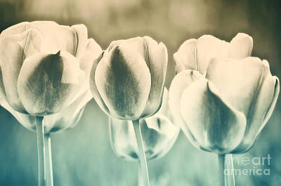 Tulip Photograph - Spring Inspiration by Angela Doelling AD DESIGN Photo and PhotoArt