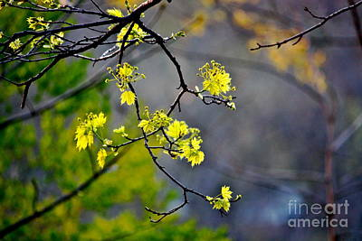Spring Leaves Print by Jay Nodianos