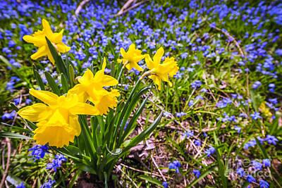 Abundance Photograph - Spring Wildflowers by Elena Elisseeva