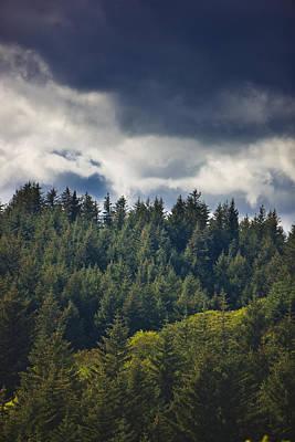 Spruce Tree Forest, Chiniak Bay, Kodiak Print by Kevin Smith