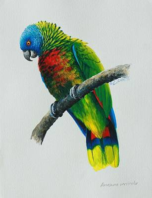 St. Lucia Parrot Painting - St Lucia Parrot by Christopher Cox