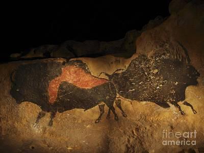 Chauvet Cave Photograph - Stone-age Cave Paintings Lascaux by Javier Truebam MSF SPL