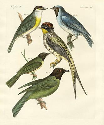Swallow Drawing - Strange Birds by Splendid Art Prints