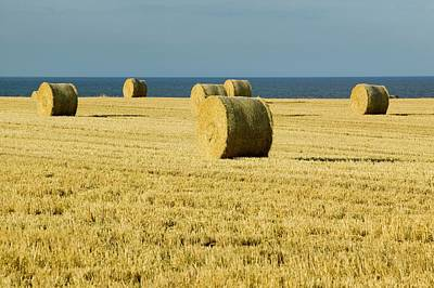 Straw Bales In A Field Print by Ashley Cooper