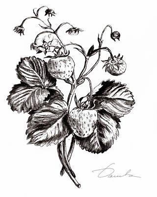 Strawberries Print by Danuta Bennett
