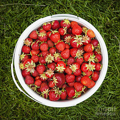Juicy Strawberries Photograph - Strawberries by Elena Elisseeva