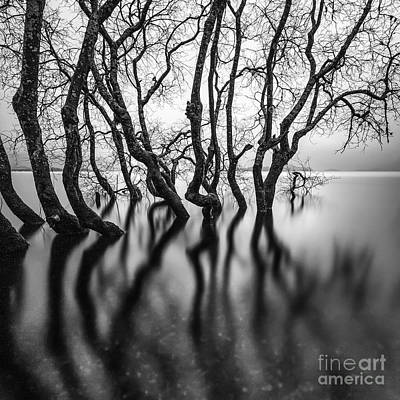 Submerge Photograph - Submerging Trees by John Farnan